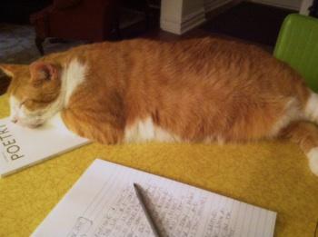 thomas the cat, writer, jason poole